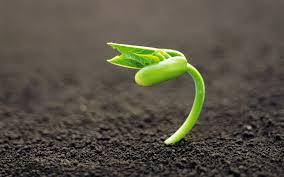 la semilla de tu SER